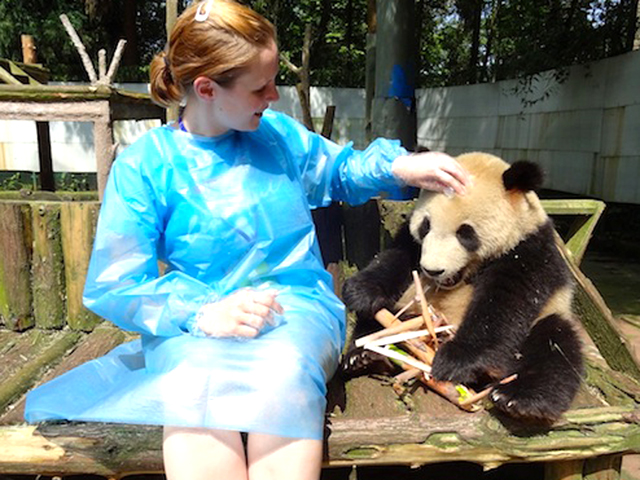 Panda Volunteer in Bifengxia
