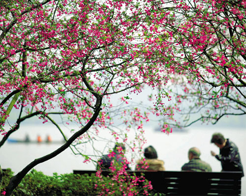 West Lake Spring Scenery