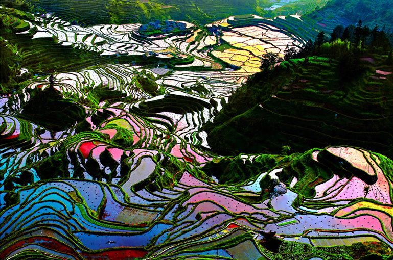 China's Spring Destination: Yuanyang Hani Rice Terraces