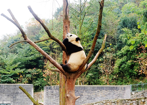 Panda Volunteer Tour