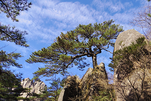 Travel with Bertina: A Visit to Huangshan