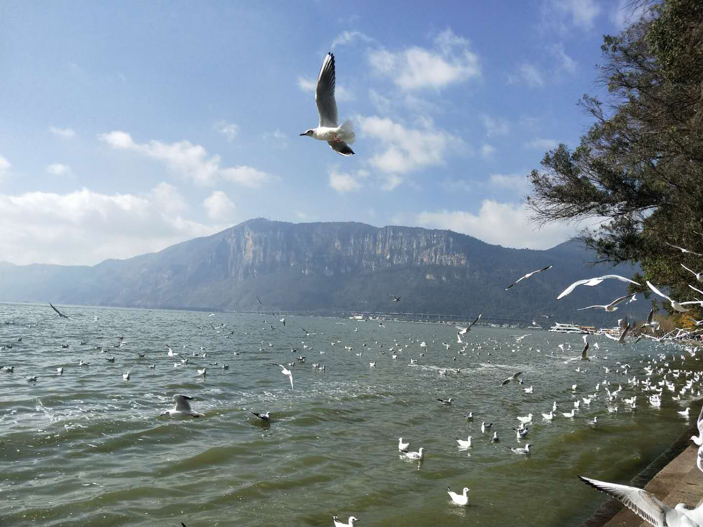 Sea Gulls at Dianchi Lake